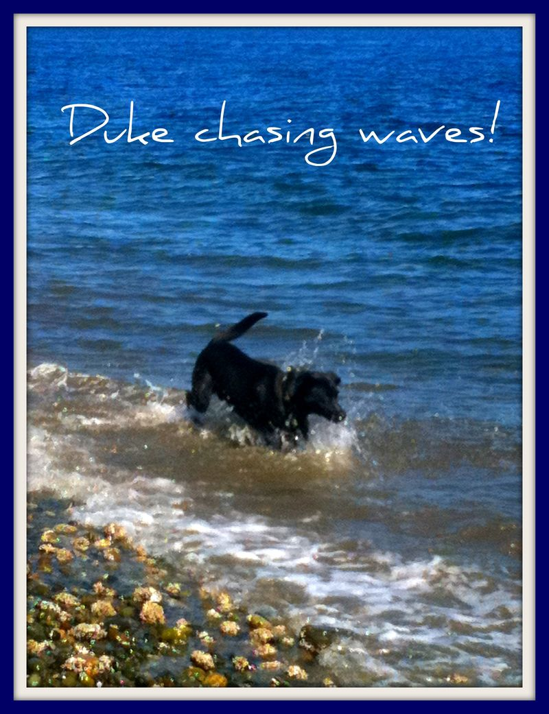 8.20 duke chasing waves