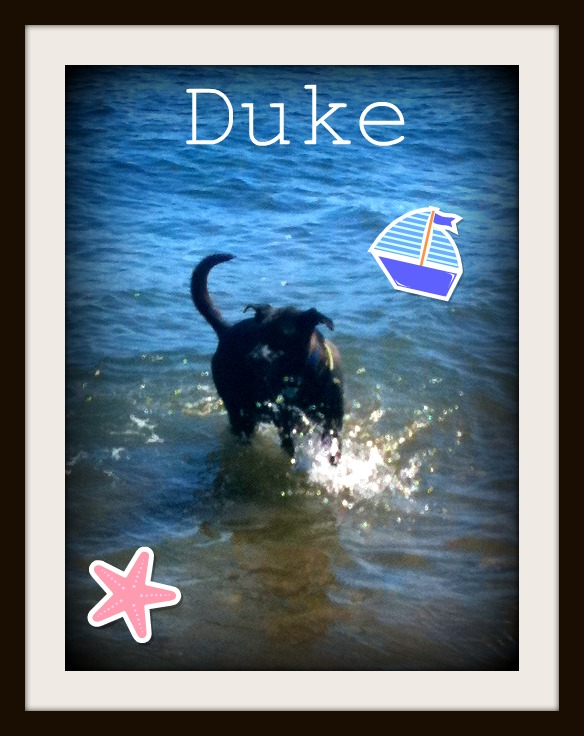 8.20 Duke splashing